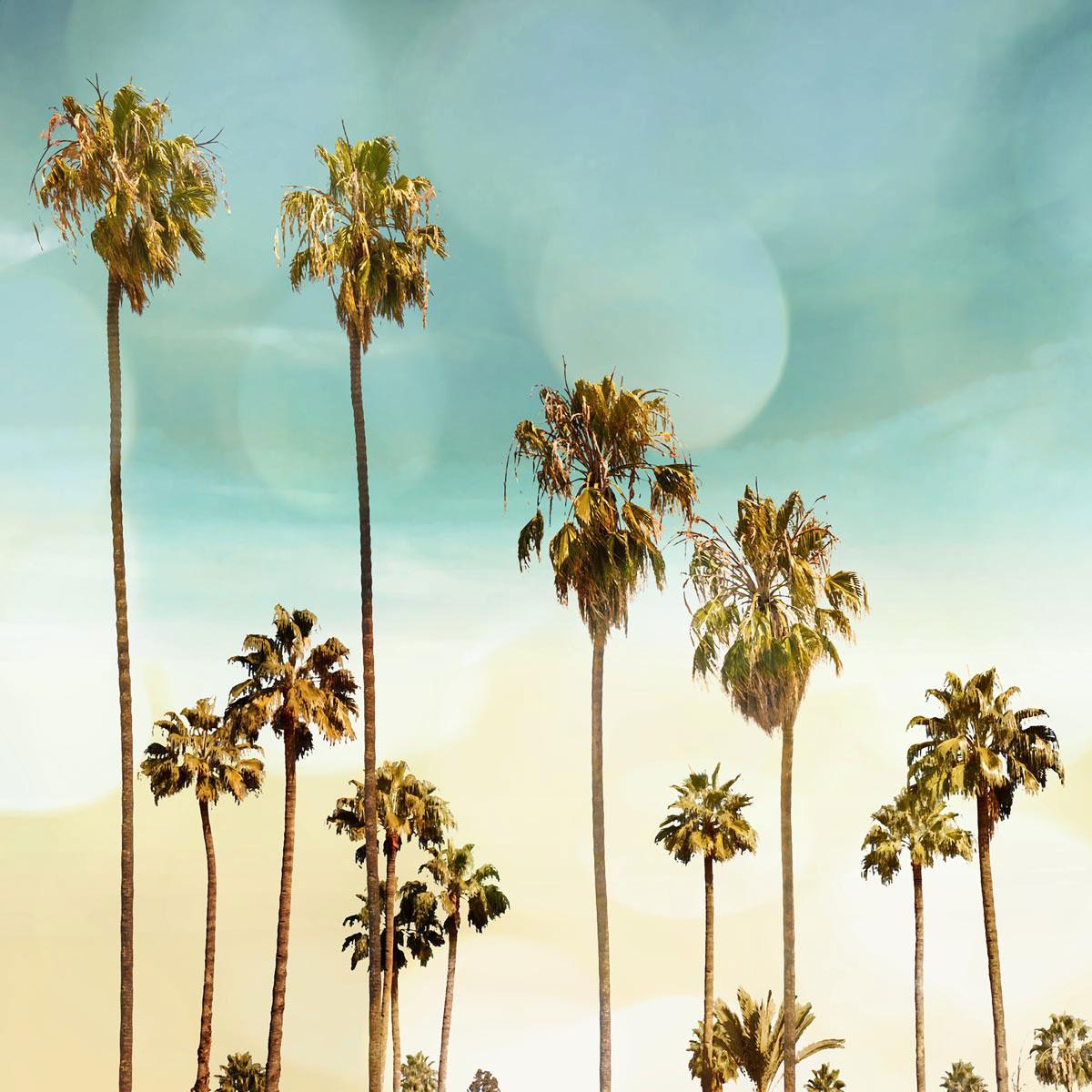 Beach Palms II by Devon Davis